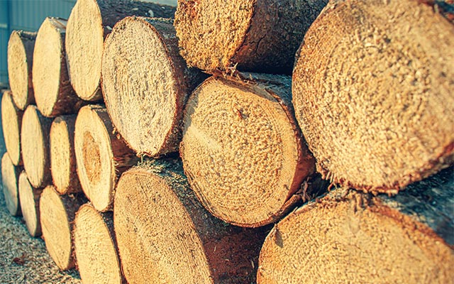 Smrekov les
